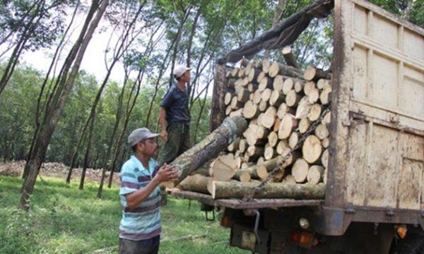 """Liên quan đến phi vụ đấu giá """"chui"""" lô tài sản 59.085 cây cao su lấy gỗ: Cần ban hành quyết định hủy kết quả trúng đấu giá để bảo toàn tài sản Nhà nước"""