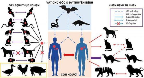 Vật nuôi có lây COVID-19 cho người?